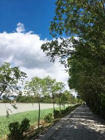 湖边蓝天白云绿树