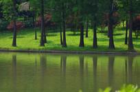 公园里的湖泊树木倒影风景图片