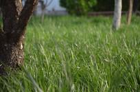 绿绿的嫩草