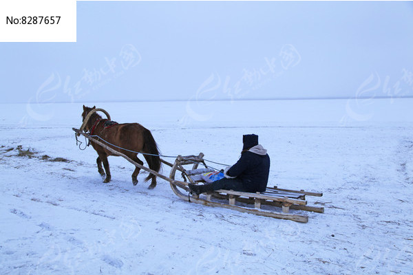 蒙古族牧民乘坐马爬犁图片