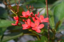 鲜艳的花蕊