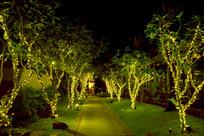 夜间的林间小道
