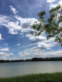 湖边树和草地