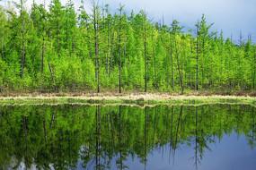 湖泊树林景观