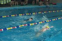 游泳池游泳比赛照片