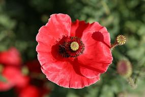 大光圈拍摄红色的花