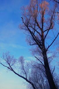 冬天的树木