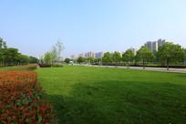 华中农业大学的校园大道