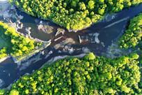 绿色树林和河流