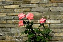 青砖墙花卉