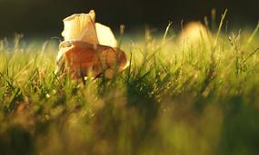 傍晚的草地