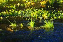 大兴安岭湿地水草