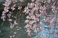 粉色浪漫樱花
