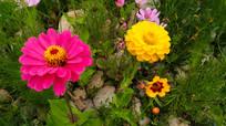 红花与黄花