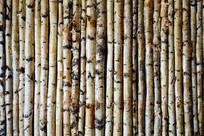 桦木杆文化墙