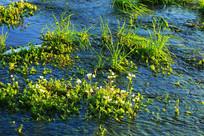 湿地水草景观