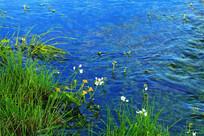 小溪水草风光