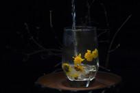 菊花茶冲泡入水