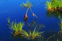 湿地水塘水草景观