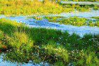 水塘沼泽水草景观