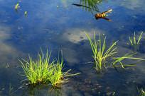 水塘植被水草