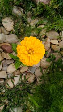 一朵金色小花