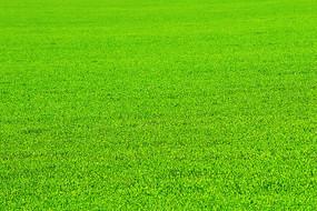 绿色的麦田景观