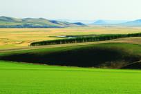 美丽的农田风景