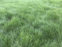 一片绿色的公园草地