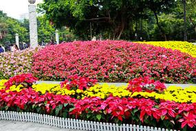 广州公园前花坛特写