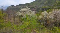 太行山的春景