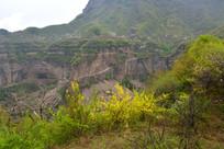 太行山的春天风景