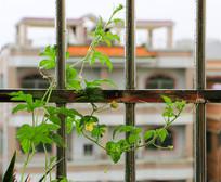 栏杆上的植物