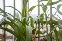 植物上的水珠