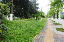 城市交通干道绿化