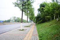 城市绿化的街边草地