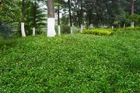 城市绿化植被