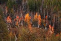 鎏金的树林风景