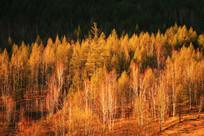 金色山林风景