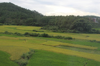 绿油油的田野庄稼