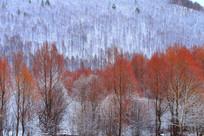美丽的柳林之雪