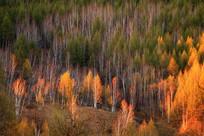 森林夕阳风景
