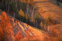 夕阳照射下的山坡树林