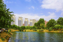 孟泰公园湖水树与高层建筑
