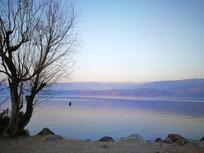 黄昏下的湖泊和枯树
