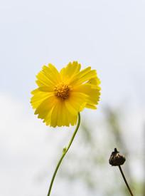 漂亮的小黄花