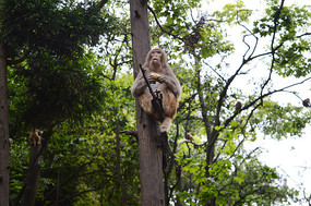 动物园的猴子