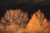 夕照树林风景