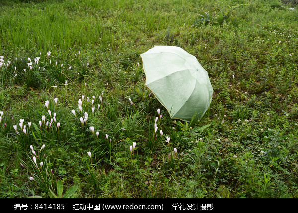 草地上的雨伞图片