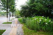 城市绿化带